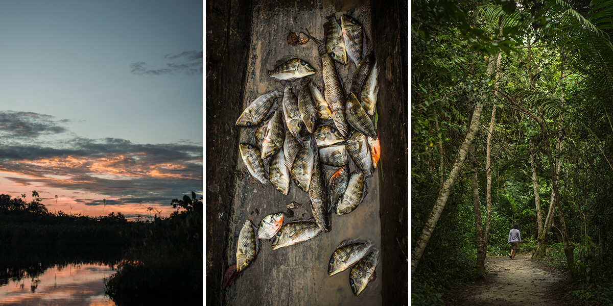 AMAZON Jungle SUNSETS, THE DAILY CATCH and a JUNGLE STROLL