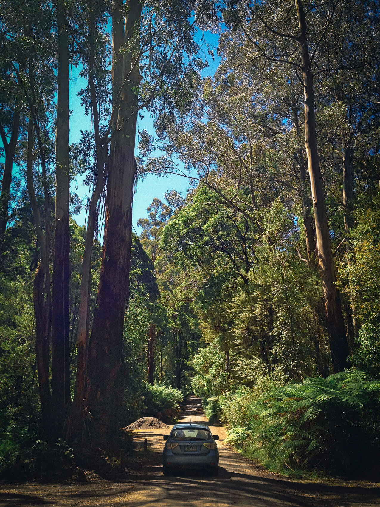 Travelling together down the road of life (Otways National Park, Victoria, Australia)